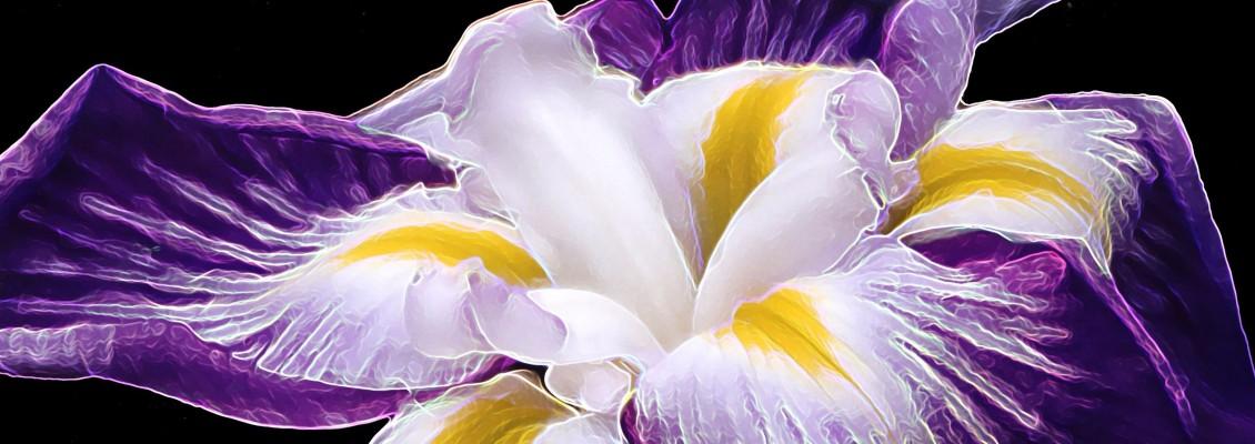 Fleur Journal Créatif